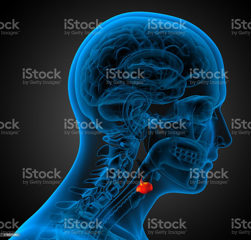3d render medical illustration of the  larynx stock photo