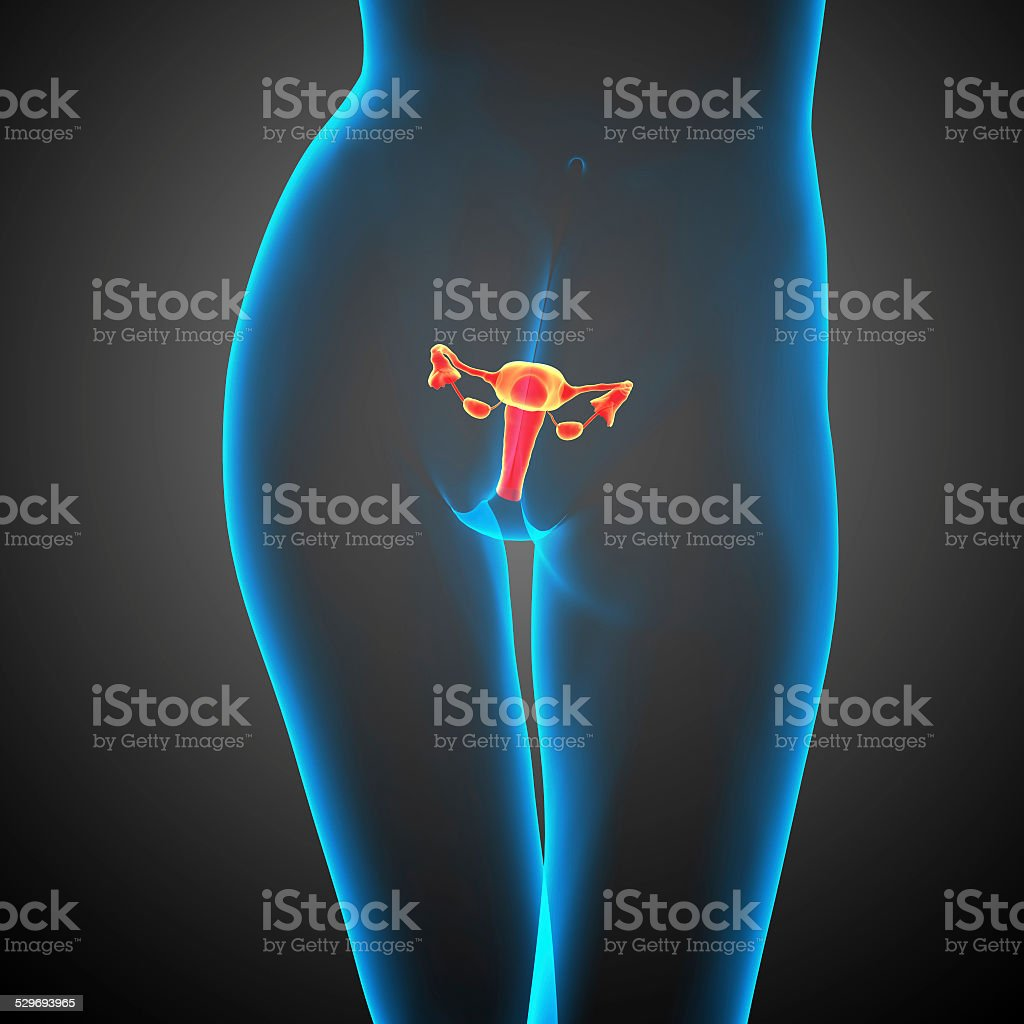3d render medical illustration of the Reproductive System stock photo