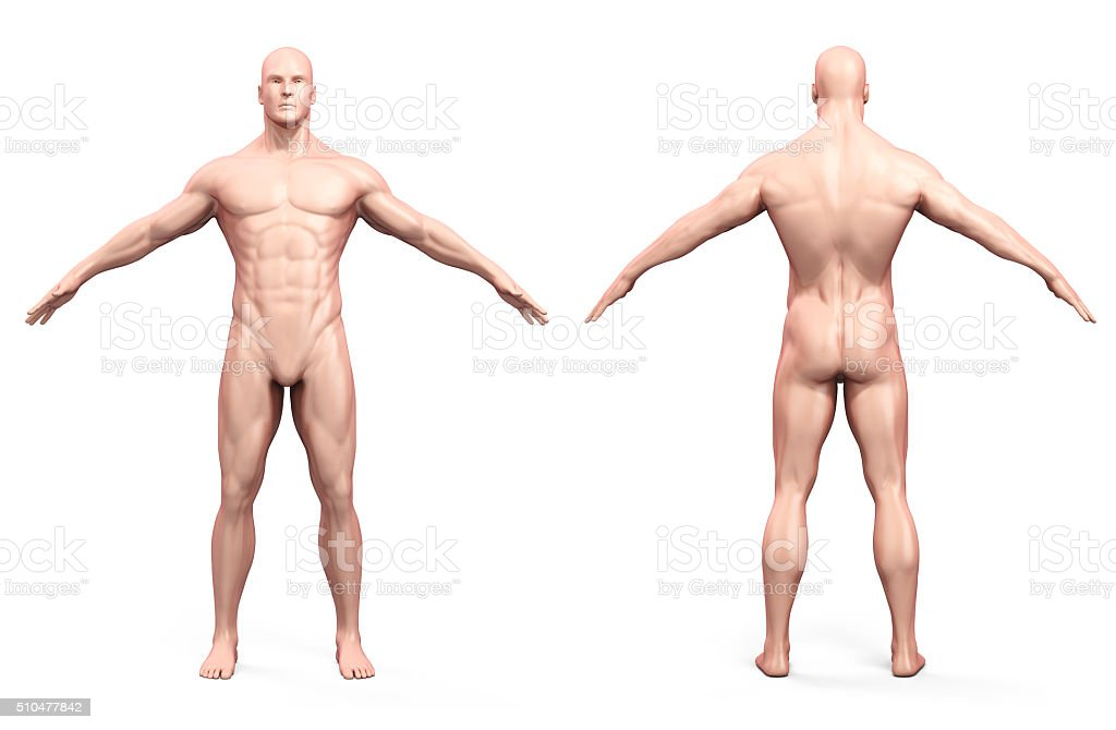 3d render of human body and skeleton stock photo