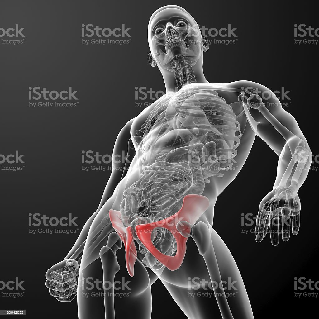 3d render pelvis under the X-rays royalty-free stock photo