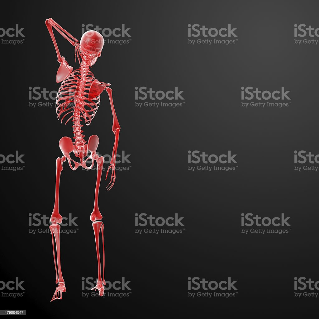 3d render Skeleton X-rays - back view royalty-free stock photo