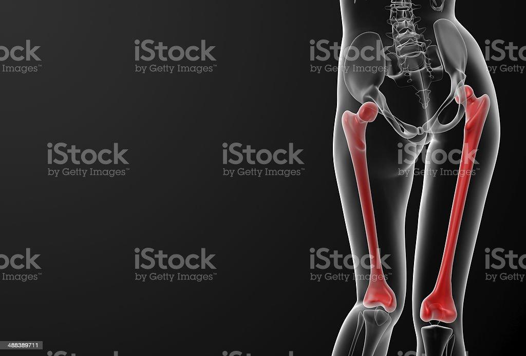 3d rendered illustration of the female femur bone stock photo