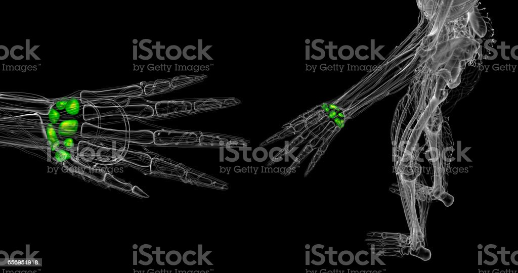 3d rendered illustration of the human carpal bones stock photo