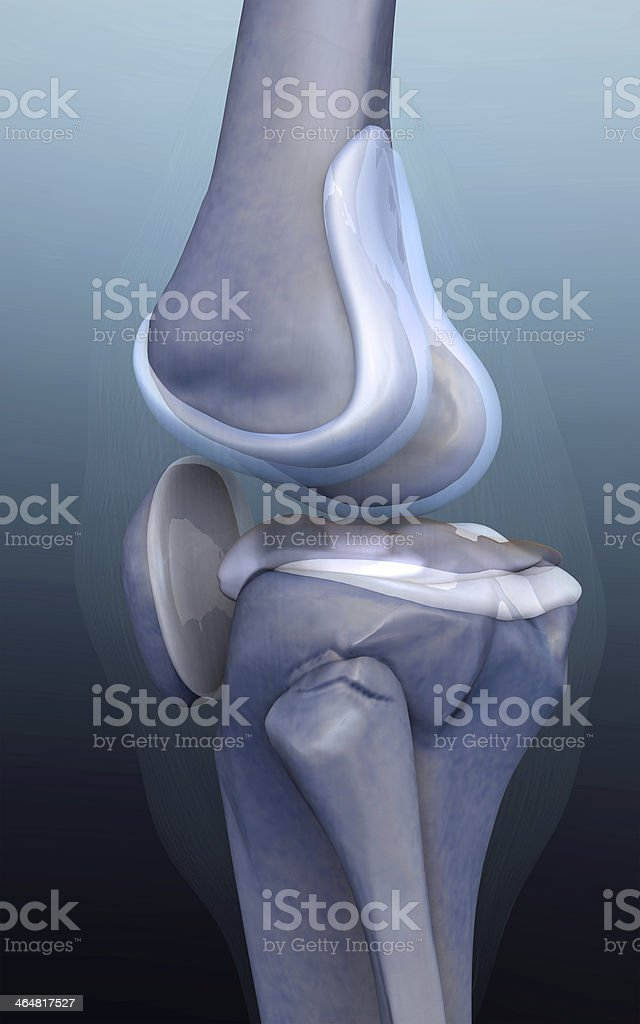 3d rendered knee illustration royalty-free stock photo