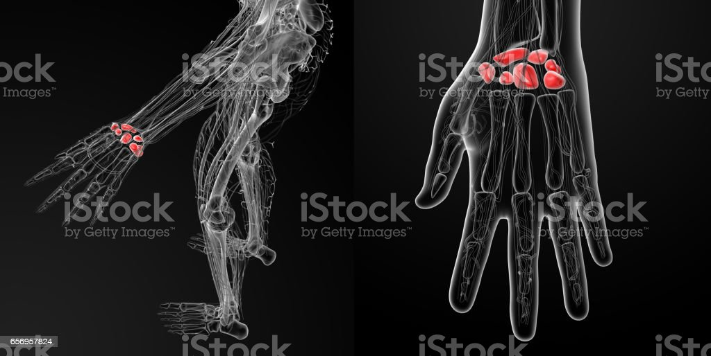 3d rendering illustration  of the human carpal bones stock photo