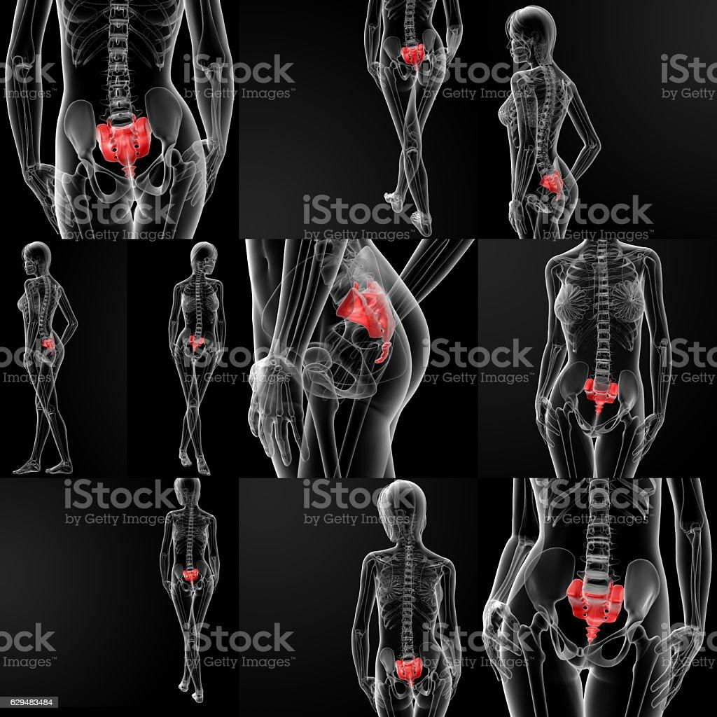 3d rendering illustration of thetibia bone stock photo