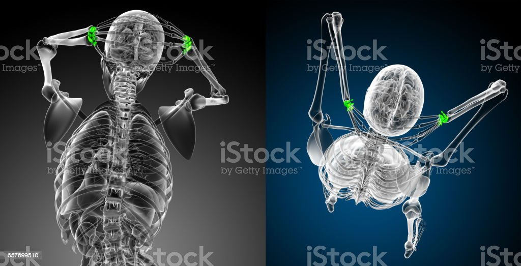 3d rendering medical illustration of the carpal bone stock photo