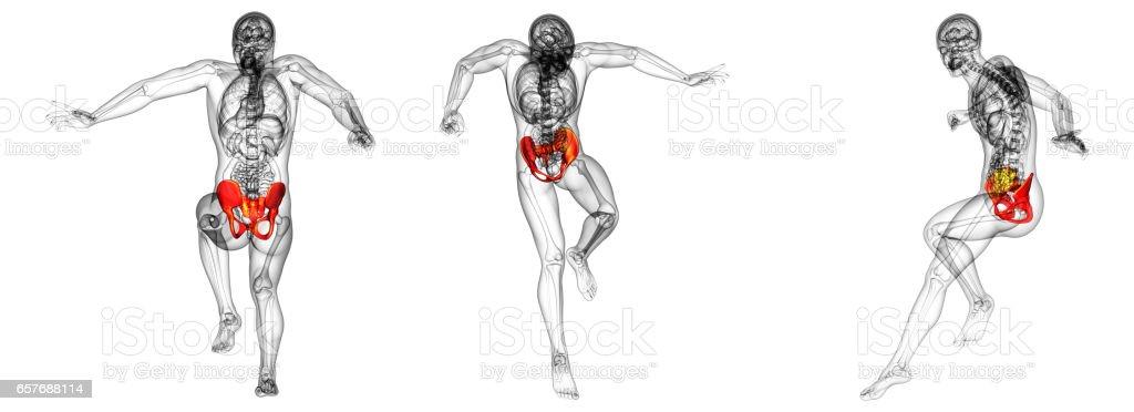 3d rendering medical illustration of the hip bone stock photo