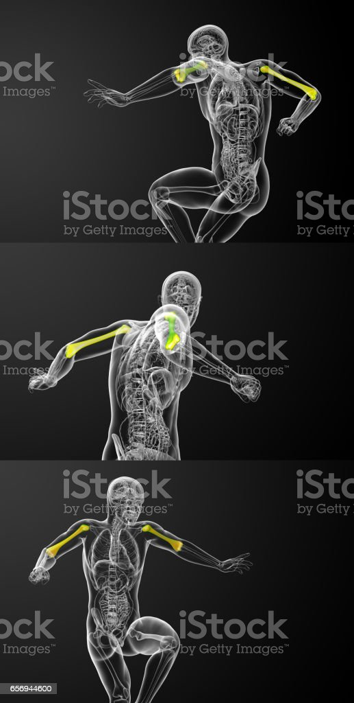 3d rendering medical illustration of the humerus bone stock photo