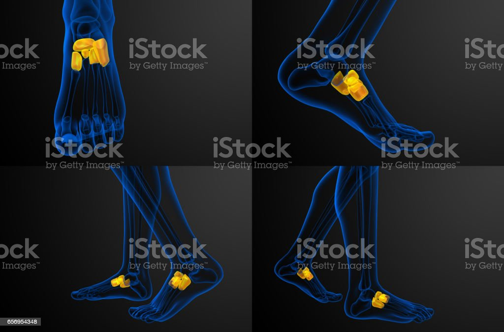 3d rendering medical illustration of the midfoot bone stock photo