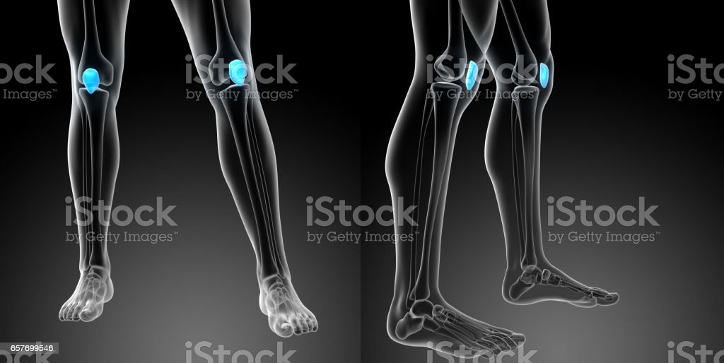 3d rendering medical illustration of the patella bone stock photo