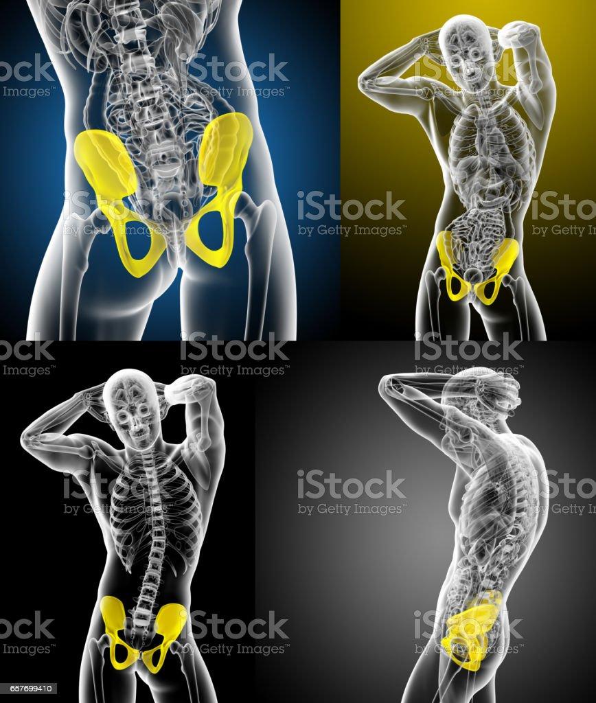 3d rendering medical illustration of the pelvis bone stock photo