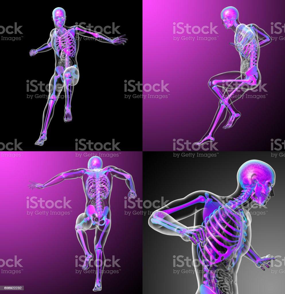 3d rendering medical illustration of the skeleton stock photo