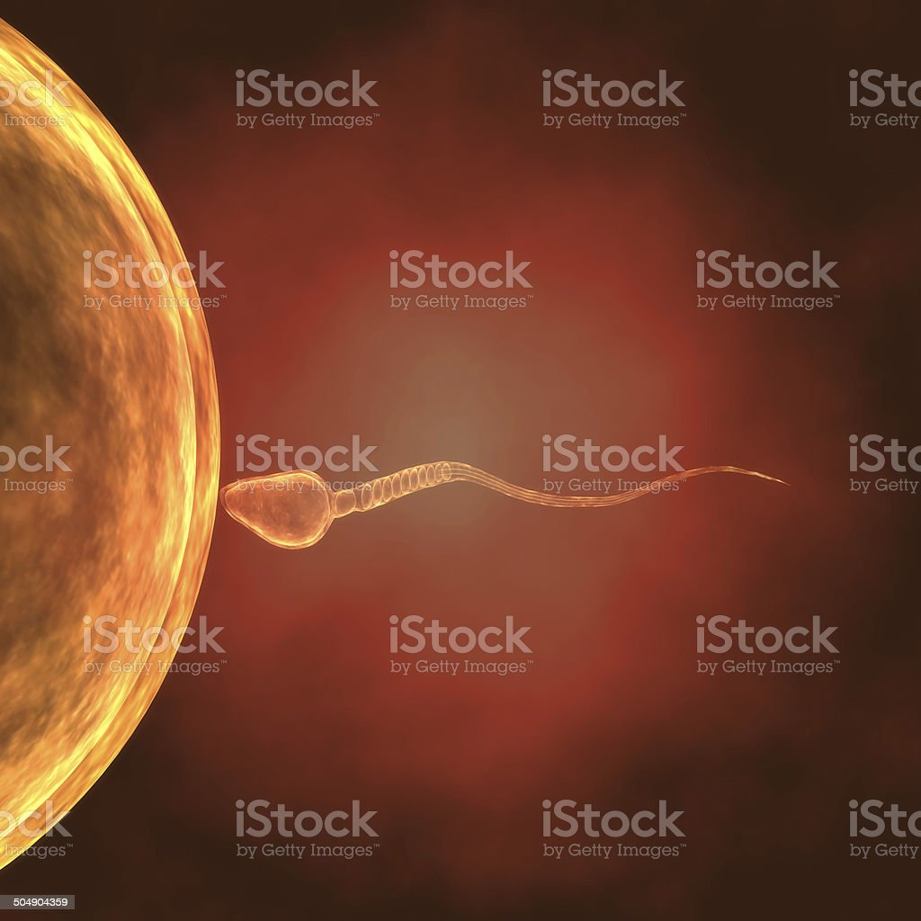 3d Single sperm fetilizes egg stock photo