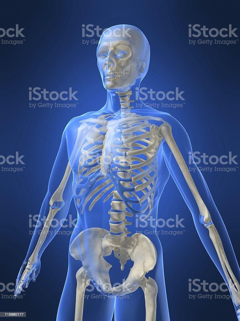 3d skeleton royalty-free stock photo