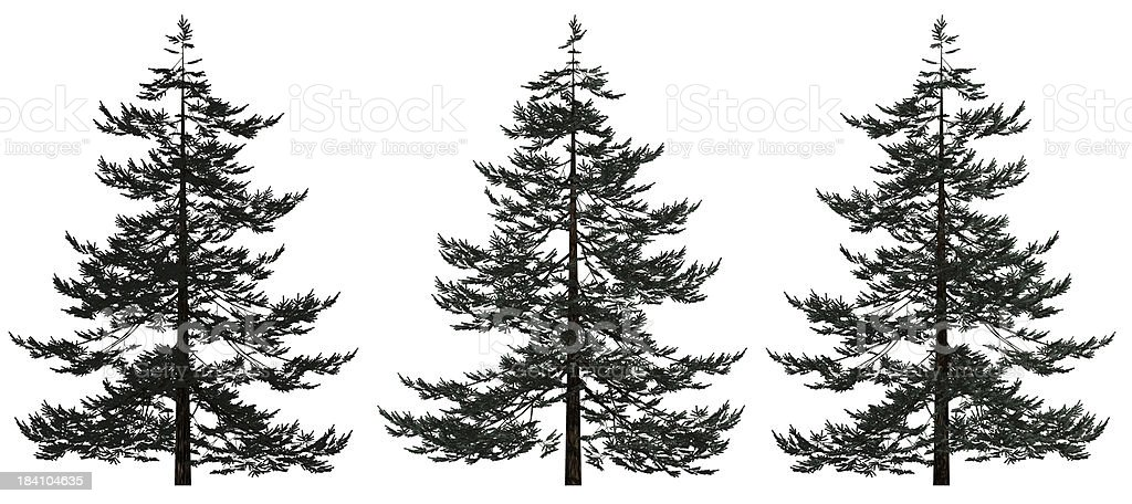3d Spruce Trees royalty-free stock photo