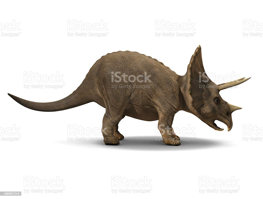 3d Triceratops stock photo