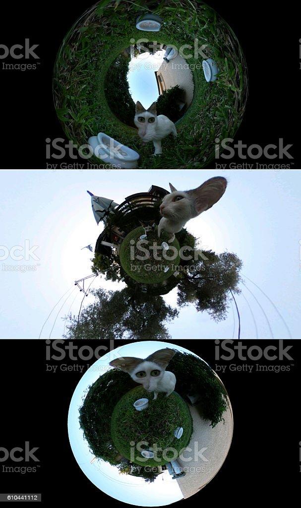 3d Weird Cat stock photo