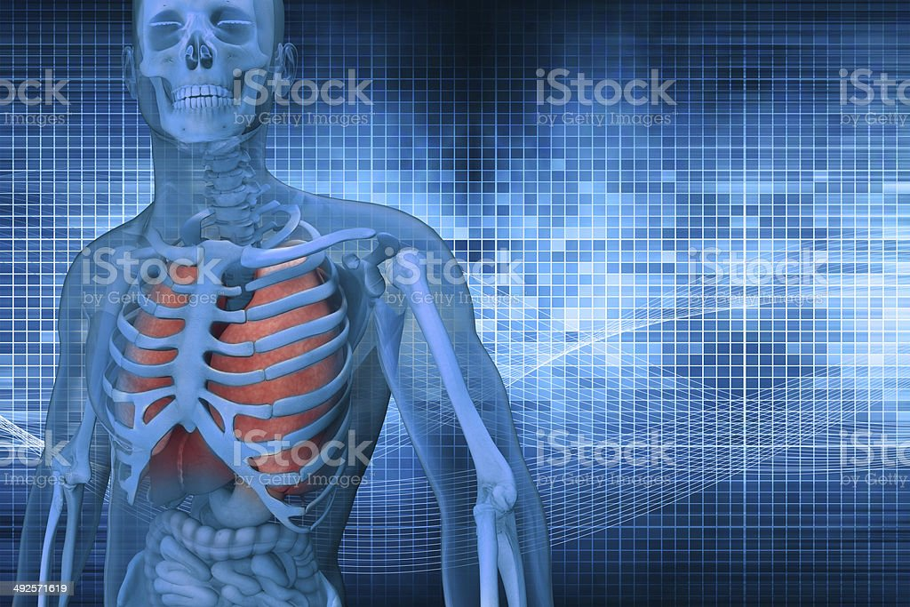 3dman anatomy stock photo