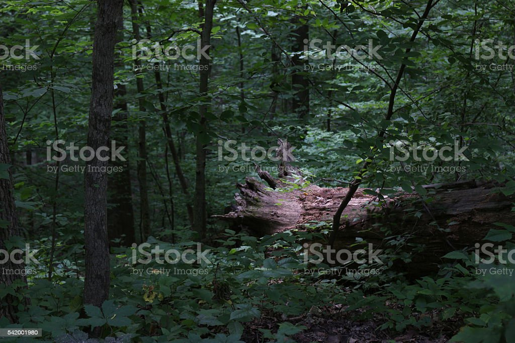 6014-Illuminated Fallen Log stock photo