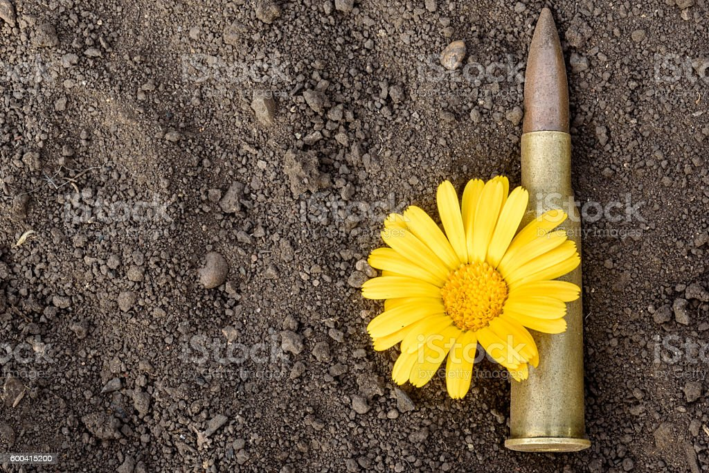 7.62mm Bullet and Flower stock photo