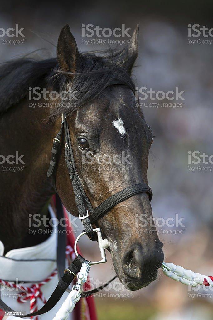 80th Japanese Derby winner - Kizuna stock photo