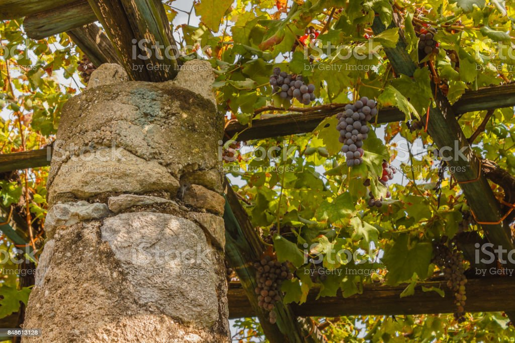 a   characteristic pylon stone and lime of the vineyards of the famous Piedmontese wine Nebbiolo Carema D.O.C (Italy) stock photo