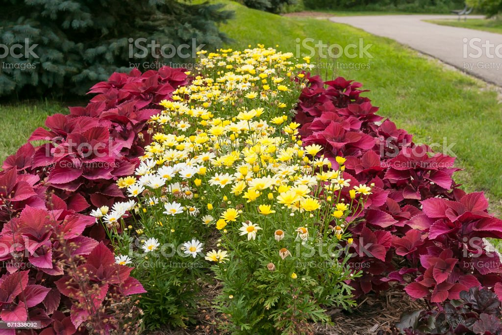 a colorful flower bed just off the walking trail stock photo