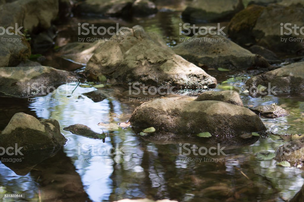 a creek in the woods stock photo