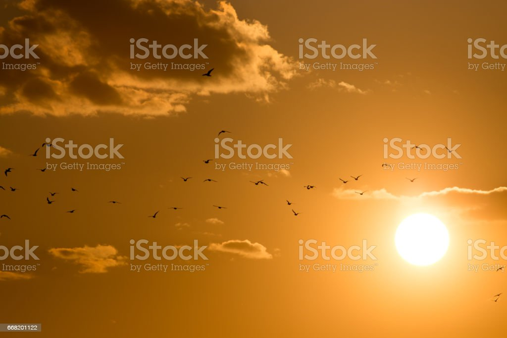 a flock of birds at dawn, the sun stock photo