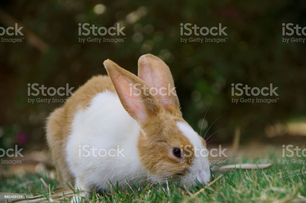 a rabbit walking on the grass stock photo