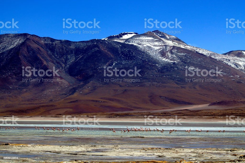 a swarm of pink flamingos in a green lagoon with a nice landscape panorama with glaciers stock photo