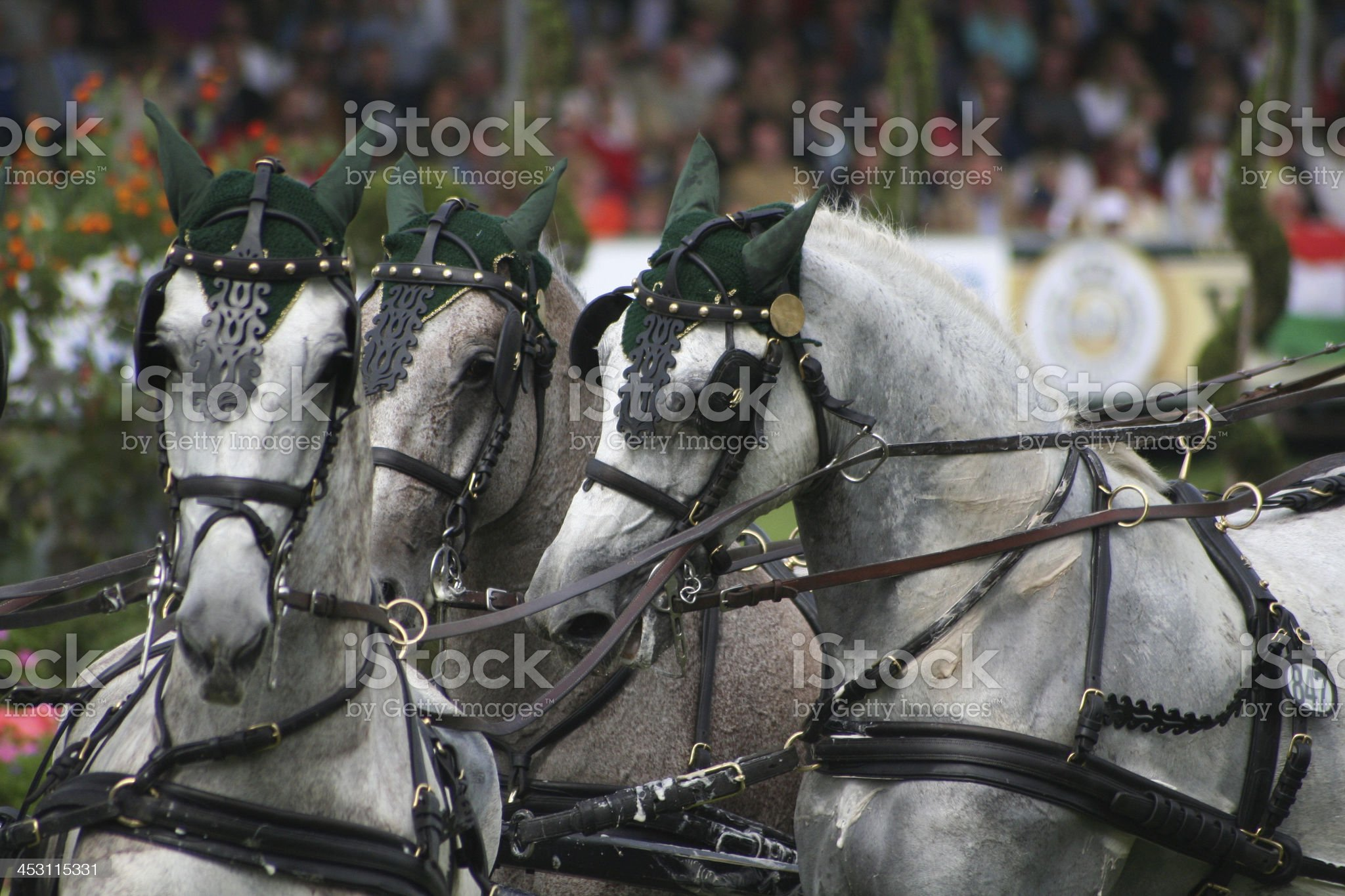 CHIO Aachen Dressur royalty-free stock photo