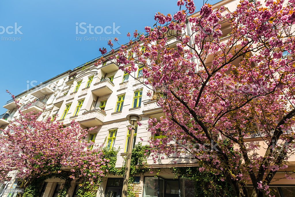 Aapartment building in Berlin with cherry trees stock photo
