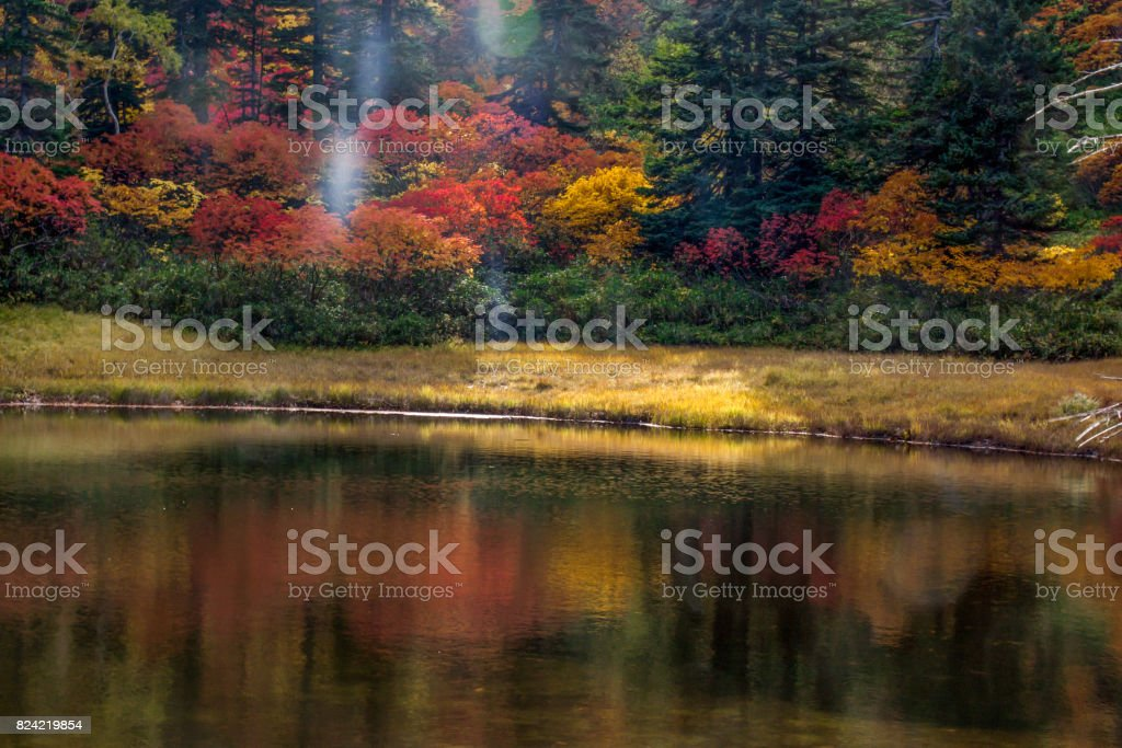 Aautumn color stock photo