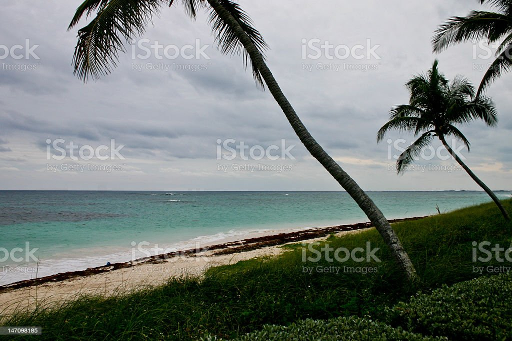 Abaco beach with palms stock photo