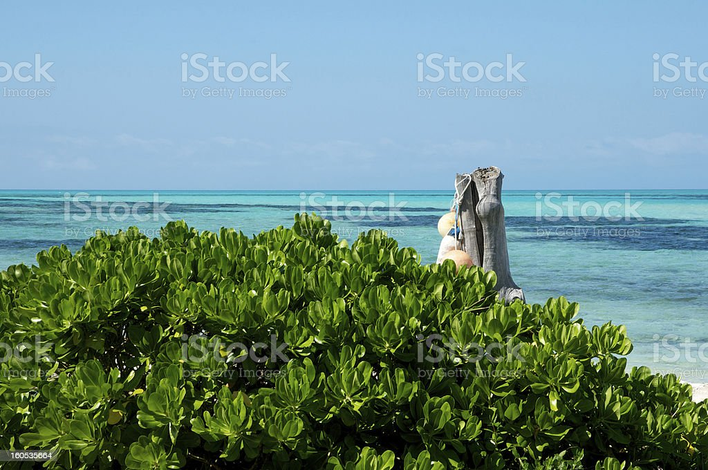 Abaco Flora and Sea Colours stock photo