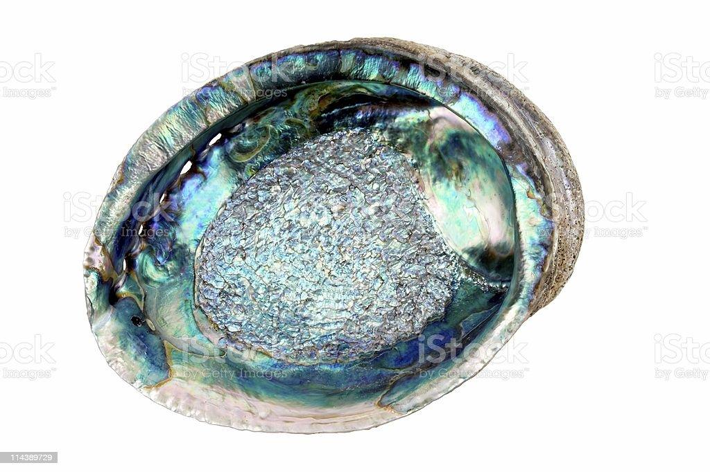 Abalone Shell stock photo