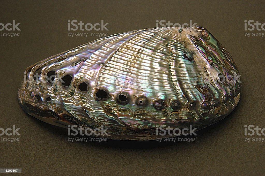 Abalone Shell royalty-free stock photo