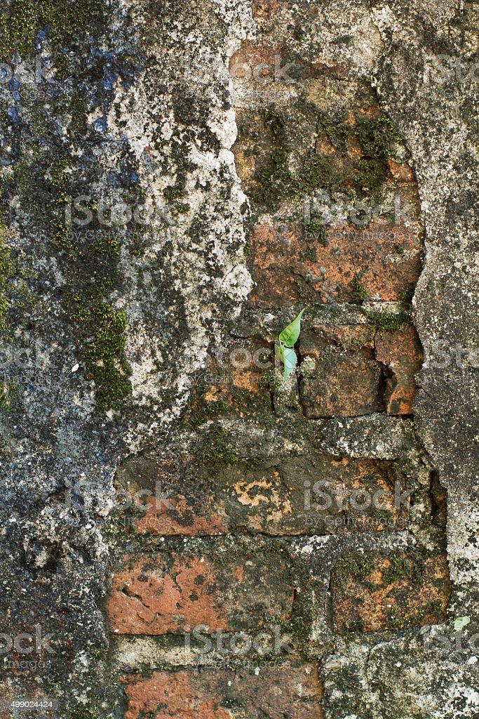 abandined brick wall stock photo
