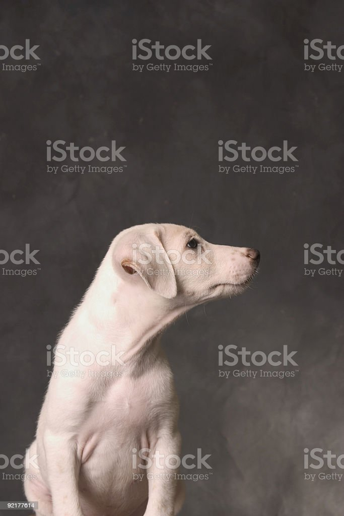 Abandon dog royalty-free stock photo