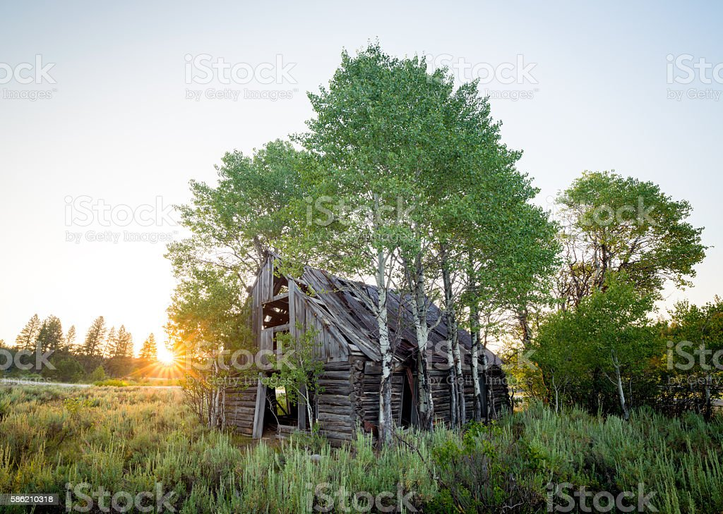 Abandon log cabin that has been overgrown with trees stock photo