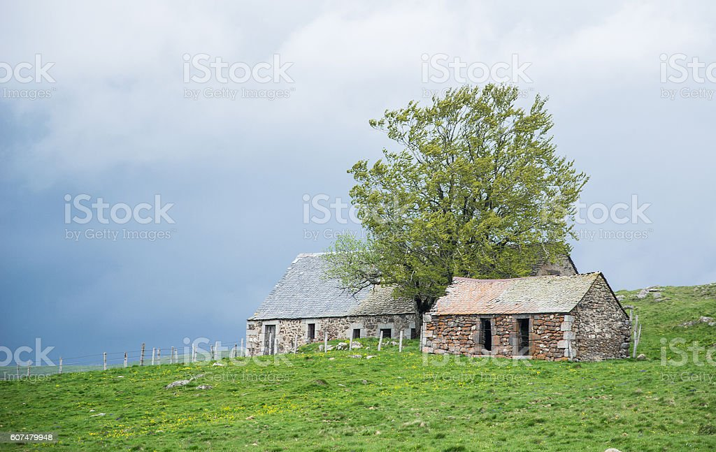 abandoned barn on green meadow stock photo