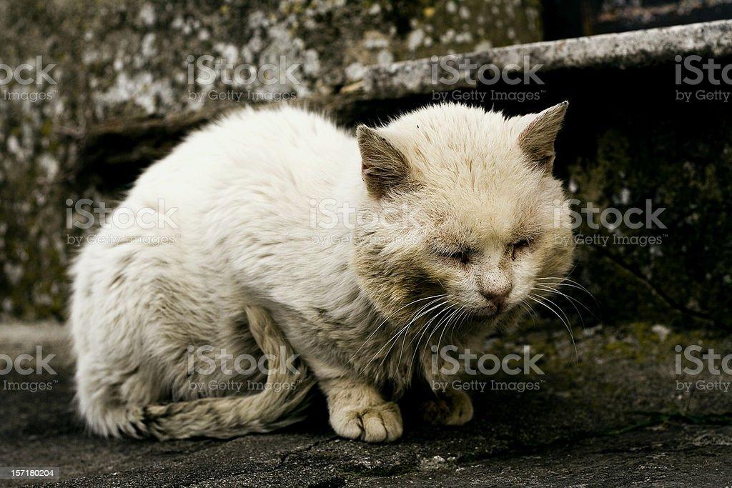 Abandoned cat royalty-free stock photo