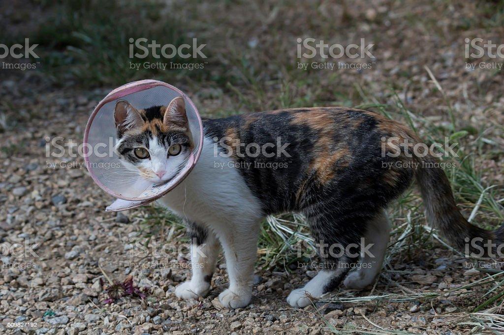 abandoned cat stock photo