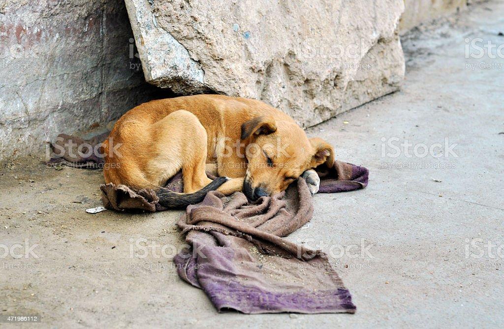 Abandoned dog stock photo