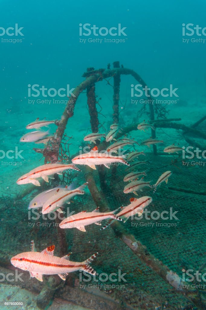 Abandoned Fishing Ghost Nets in Ocean Environmental Damage stock photo