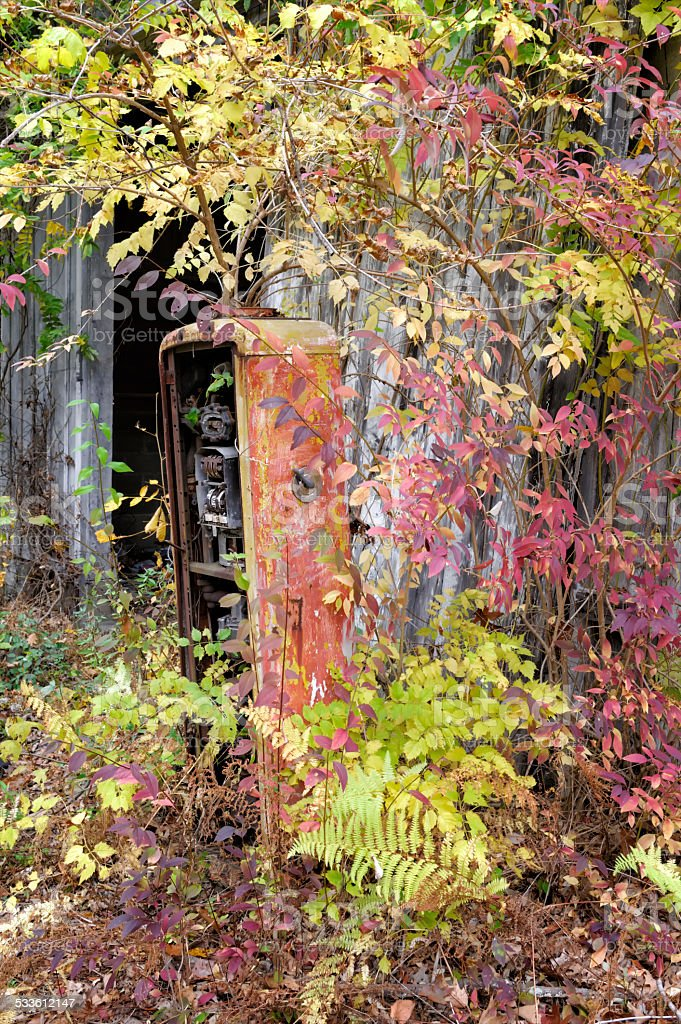 Abandoned Gas Pump Overgrown by Bushes stock photo