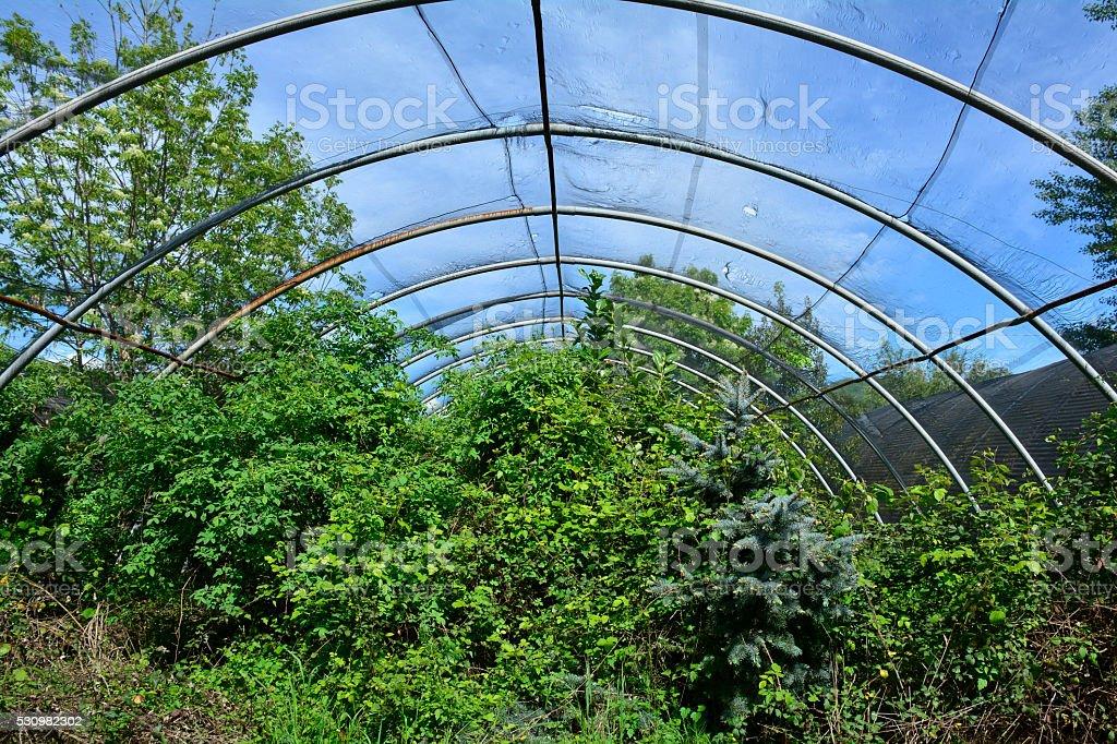 Abandoned Greenhouses stock photo