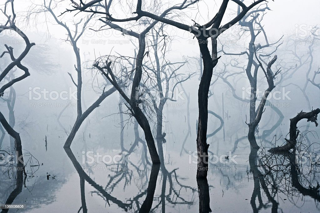 Abandoned  Horror Trees. royalty-free stock photo